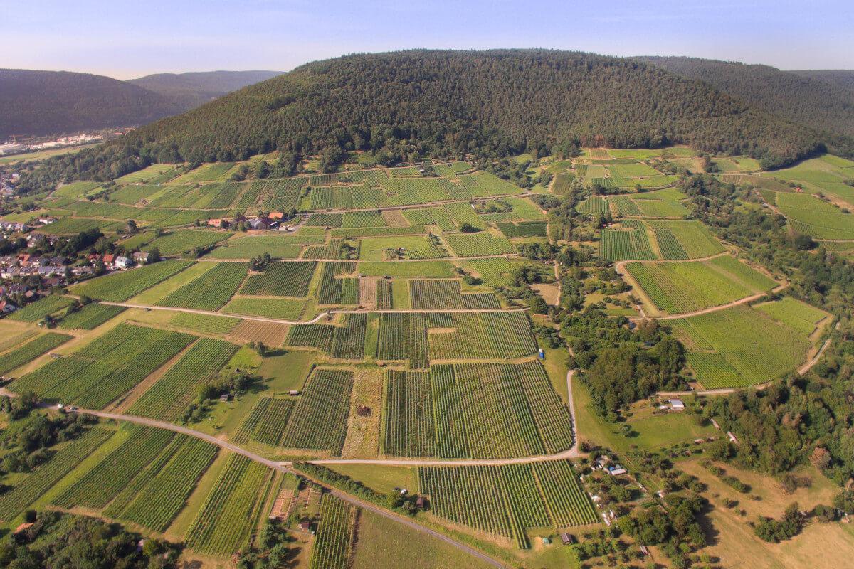 Weinbau Tradition